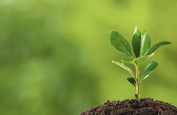Tree Planting Ann Arbor MI | Guardian Tree Experts